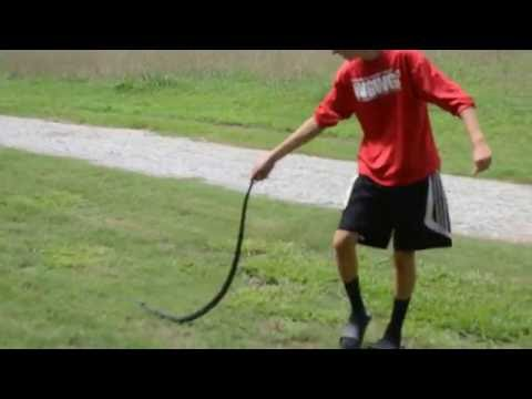 4ft black rat snake