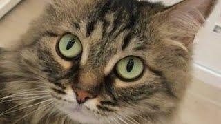 ШИКАРНАЯ жизнь кошки Мили Ванили !!!ЕДЕМ на КАСТИНГ !!!