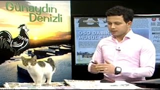Kitten Interrupts TV Broadcast by : ABC News