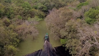 DJI - Through the Amazon Rainforest