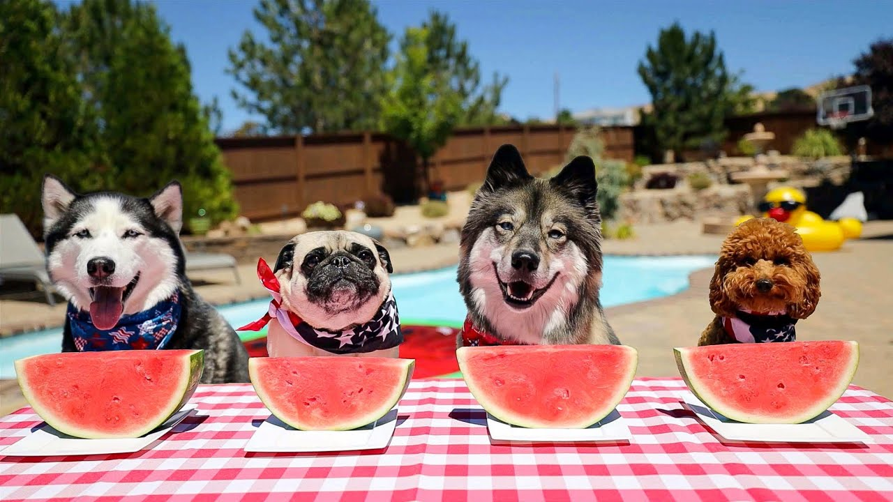 Epic Watermelon Eating Contest!