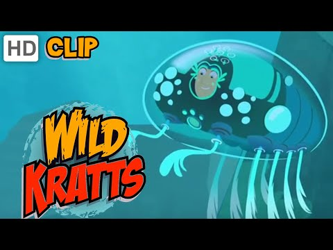 Wild Kratts - Starfish Power
