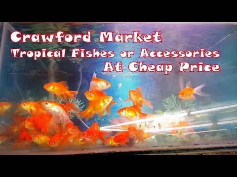 Tropical Fishes or Accessories Shop in Mumbai | At Cheap Price | Crawford Market