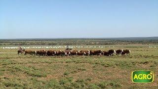 AgroTV en Brasil: Un argentino revoluciona la ganadería en Mato Grosso (#775 2018-06-09)