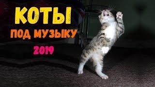 СМЕШНЫЕ КОТЫ - Смешные кошки РЕАЛЬНО ЛЮТЫЕ ПРИКОЛЫ под музыку  с котами (2019)