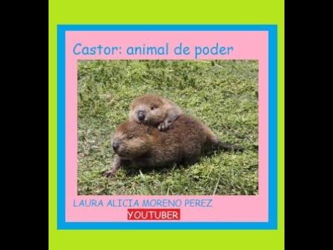 Castor: Animal De Poder
