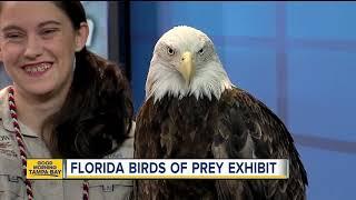 Florida Birds of Prey