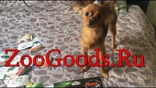 Собака Блогер 🐶 Обзор покупок с сайта ZooGoods ❣️