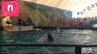 💖Московский дельфинарий в Боровом. Белый кит Лера, морские котики, дельфины💖dolphinarium Бурабай💖