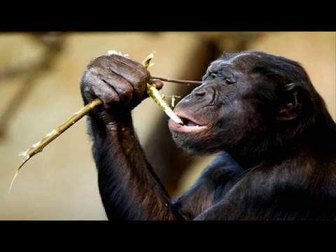 The Stoned Ape Theory | Confessions of a Hierophant | Part 10
