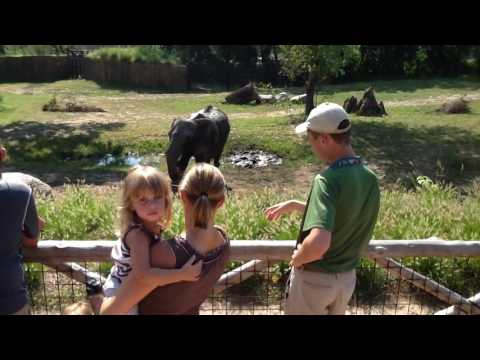 African Elephant Interpretive Chat at Omaha's Henry Doorly Zoo & Aquarium 1