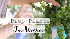 How to Prep Plants to Come Indoors for Winter! | Bring Houseplants Indoors to Overwinter
