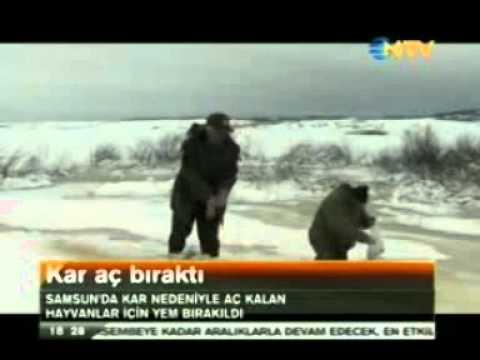 Samsun'da Yaban Hayvanları İçin Doğaya 13 Ton Yem Bırakıldı