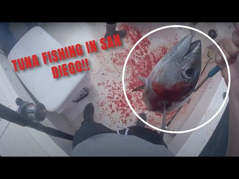 CATCHING YELLOWFIN TUNA *crazy Action*   San Diego Charters  