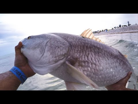 I Caught The Biggest Fish On The Pier In Panama City Beach Florida