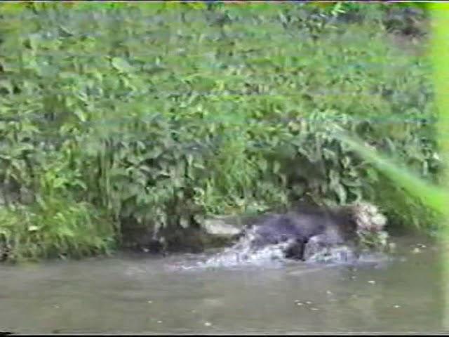 Kwebmeute Biesbosch 1998