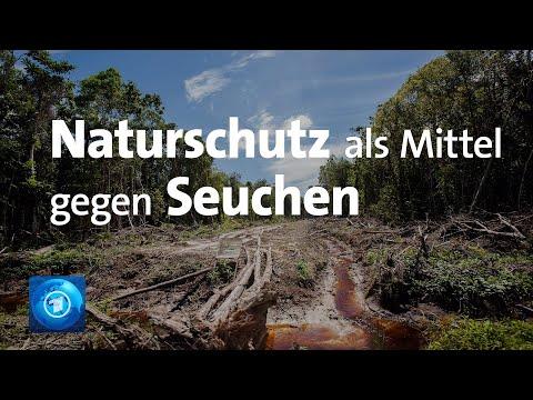 Als Versicherung Vor Seuchen: Umweltministerin Fordert Mehr Naturschutz