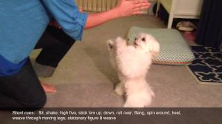 Obi The Maltese Tricks Compilation