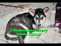 Carly Pearce Every Little Thing Tonka The Malamute mp3