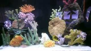 Blue Planet Aquarium Services Video Montage, Custom Aquariums