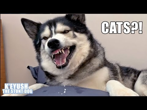 My Dog Has STRONG Opinions On Cats; He SPAT At Me!
