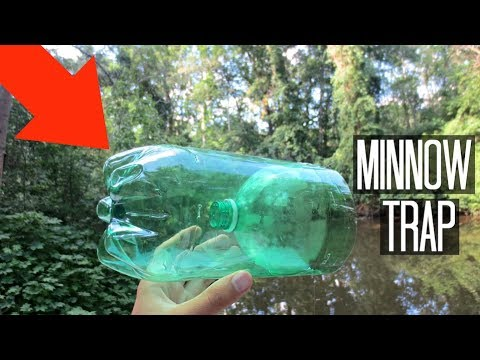 Minnow Trapping Homemade 2 Liter Trap Surprise Catch