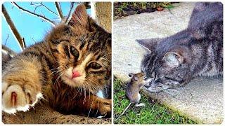 Смешные Кошки 2016! (#17) Веселая Видео Подборка! Смешные Животные 2016/