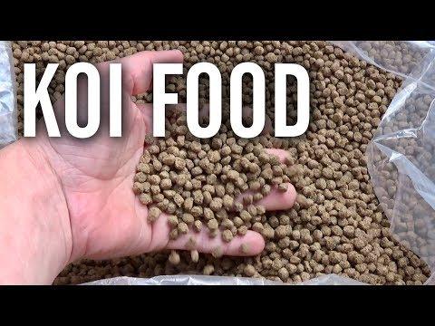 What I Feed My Koi Fish