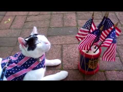 Cute Cats video| American Flag,  Eagle & Funny Cats Animal Friends| Patriotic Music