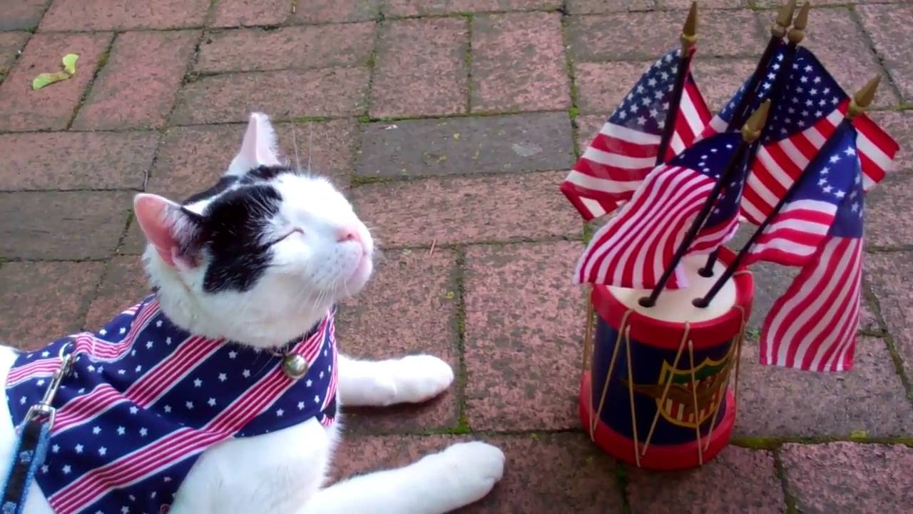 Cute Cats July 4th Video| American Flag, Eagle U0026 Funny Cats Animal Friends|  Patriotic Music