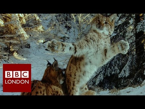 Wildlife Photography Exhibition At The Natural History Museum – BBC London