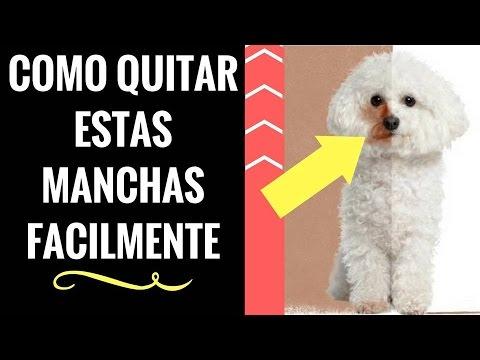 limpiar perra estilo perrito