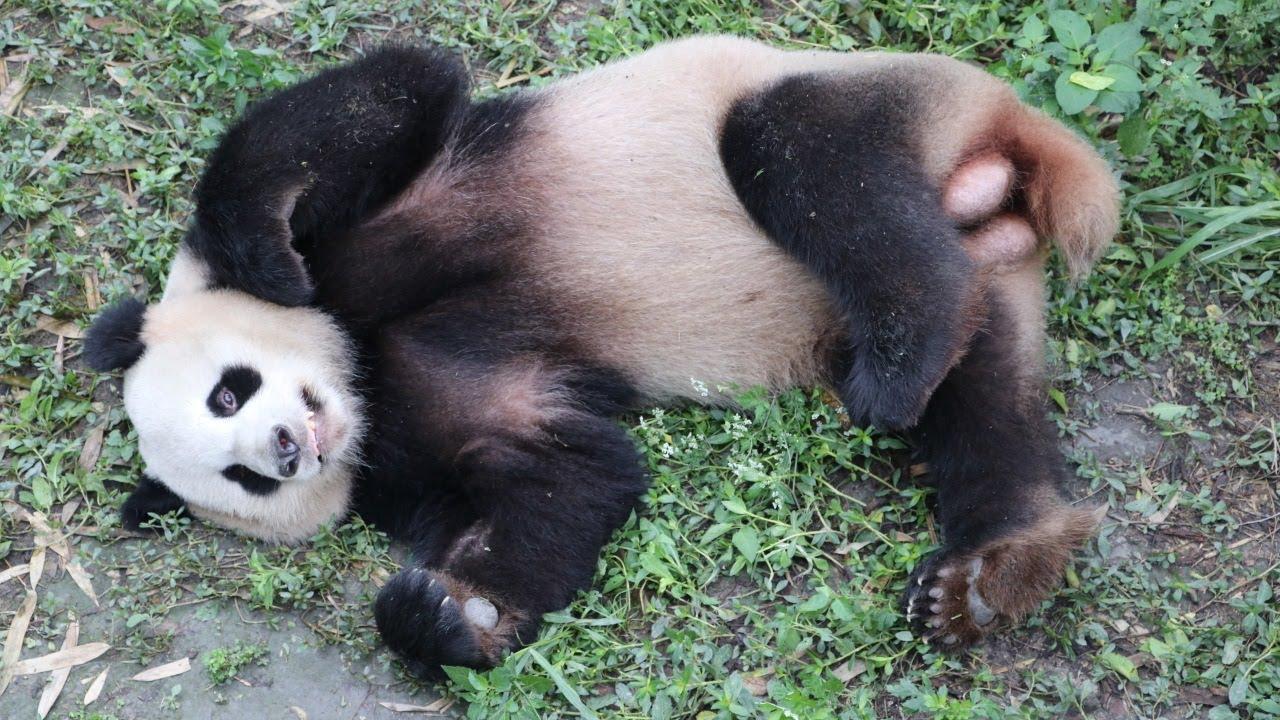 bedeutung der namen der neuen berliner pandas youtube. Black Bedroom Furniture Sets. Home Design Ideas