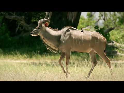 Botswana - Największy rezerwat świata
