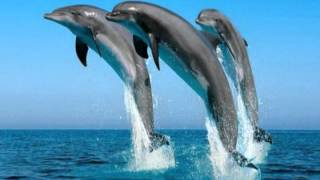 The promise (the dolphin song).mp4