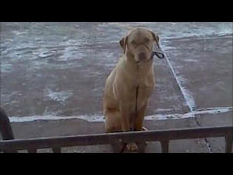 Собака замерзала, пока ее хозяин был на почте. Но то что сделал простой прохожий невероятно