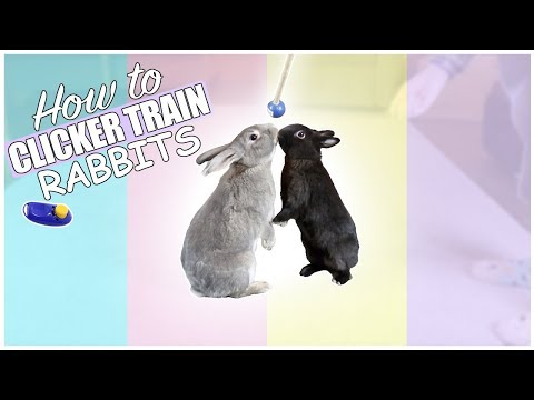 How To Teach Bunnies Tricks - Clicker Training Rabbits