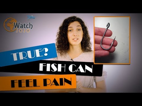 Believe It Or Not, Fish Can Feel Pain