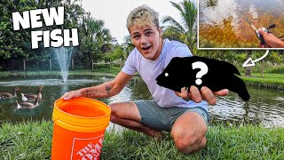 CATCHING *COLORFUL* RARE FISH for My DUCK POND!!!