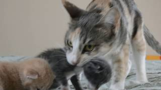 mother cats and their kittens