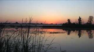 Поклевка крупной рыбы или утро на рыбалке(Поклевка крупной рыбы или утро на рыбалке Ловля крупной рыбы маховой поплавочной удочкой летом Крупная..., 2016-07-01T07:19:02.000Z)