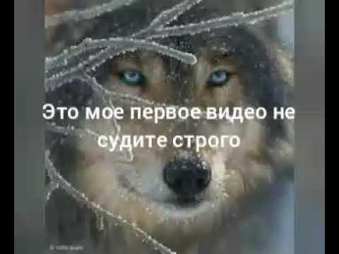 Я одинокий волк лишь луна мой друг
