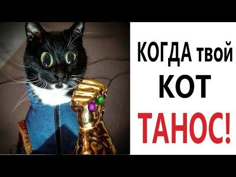 Лютые приколы. КОГДА ТВОЙ КОТ ТАНОС! СМЕШНЫЕ КОТЫ! ПОПРОБУЙ НЕ ЗАСМЕЯТЬСЯ - Domi Show