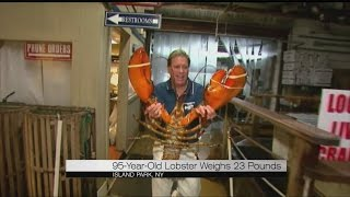 Giant 90-year-old lobster