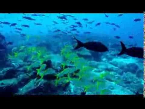 Plongée aux Galapagos - Décembre 2013