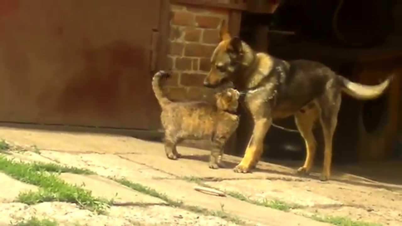 ♥Собака и кошка♥ Л♥Ю♥Б♥О♥В♥Ь♥ - YouTube