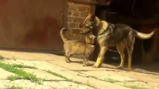 ♥Собака и кошка♥ Л♥Ю♥Б♥О♥В♥Ь♥