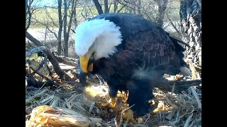 Mom's breakfast. Decorah Eagles. 10.23 / 14 November 2018