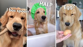 I Has Spoon, I Has Egg, I Has Baff | Compilation