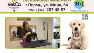 Ветеринарная клиника Ветка